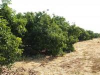 Βιολογικά Αβοκάντο Κρήτης